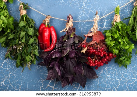 Herbs and spices on blue background; parsley; mint; hot peppers; cilantro; Purple basil; viburnum; harvesting herbs for the winter; herbal therapy; Cover for a cookbook; background; the substrate - stock photo