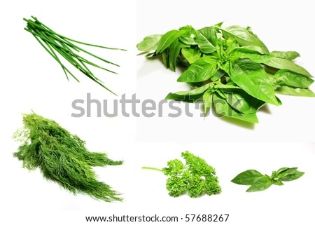 herbs collage isolated on white - stock photo