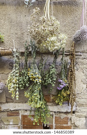 Herbs, detail of some plants for health care, medicine - stock photo