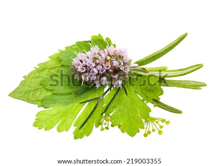 Herbs. Dill herb, rosemary spice, mint, parsley isolated on white background. - stock photo