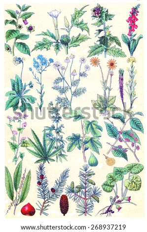Herbs, flowers and plant, vintage engraved illustration. La Vie dans la nature, 1890.  - stock photo