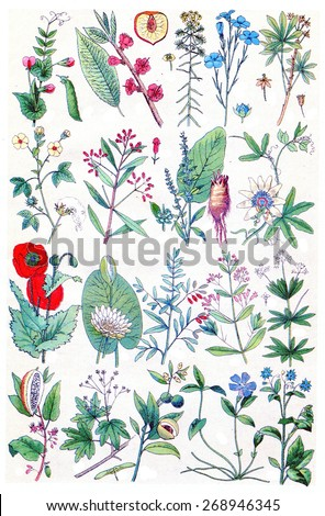 Herbs, flowers and plants collection, vintage engraved illustration. La Vie dans la nature, 1890.  - stock photo