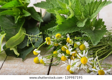 Herbs for tea on wooden background, Chamomile, mint, melissa, linden. Selective focus. - stock photo