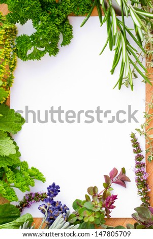 Herbs frame over white background - space for text
