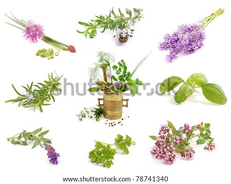 Herbs. Fresh from garden, on white background. Chives, oregano, thyme, lavender, rosemary, sage ,....