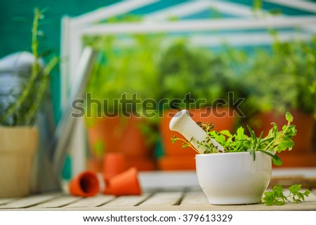 Herbs from the greenhouse in ceramic white mortar. - stock photo