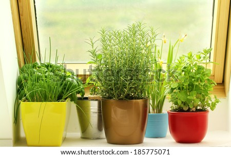 herbs growing on window - stock photo