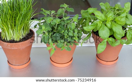 herbs growing on window-sill - stock photo