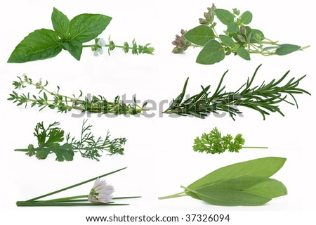 Herbs isolated against a white background - stock photo