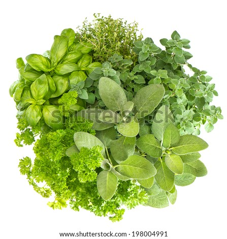 herbs isolated on white background. fresh basil, marjoram, parsley, rosemary, thyme, sage. food ingredients - stock photo