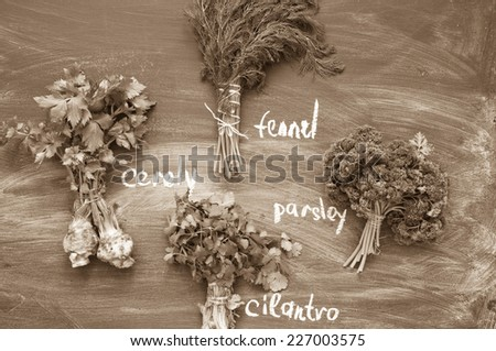 Herbs on a blackboard - stock photo