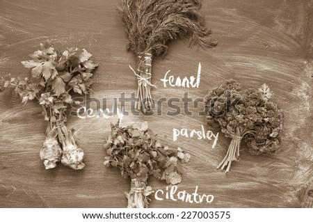Herbs on a blackboard - stock photo