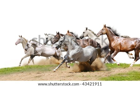 herd isolated on white - stock photo
