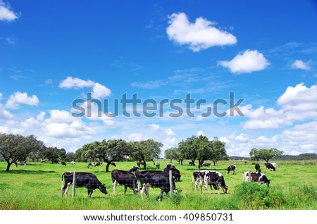Herd of cows grazing at on green field - stock photo