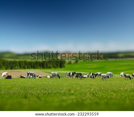 Herd of cows on a green sunny meadow with fresh grass. Focus on cows, edges are blurred - stock photo