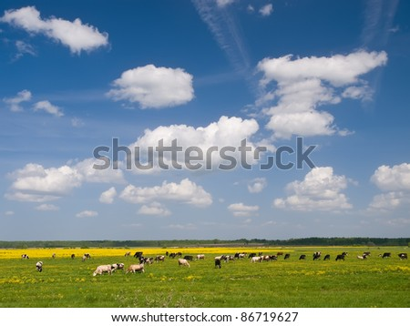 Herd of cows on field under blue sky - stock photo