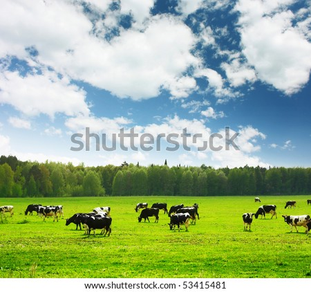 Herd of cows on green meadow under blue sky with clouds - stock photo