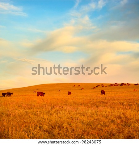 Herd of cows on morning summer field under blue sky - stock photo