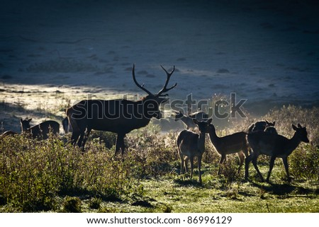 Herd of deer standing on the meadow at sunrise - stock photo