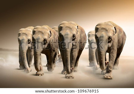 Herd of elephants - stock photo