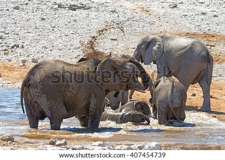 Herd of elephants drinking and bathing at a waterhole in Etosha National Park, Namibia - stock photo