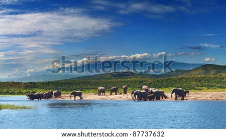 Herd of elephants in african savanna at watering - stock photo