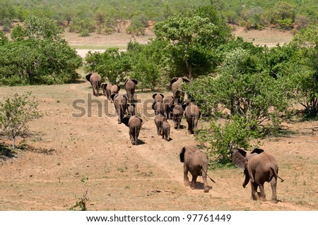 Herd of Elephants running South Africa - stock photo