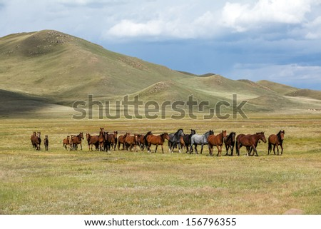 Herd of grazing horses in the mountains - stock photo