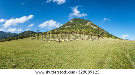 Herd of grazing sheeps on mountain pasture under blue sky with white clouds - Greater Fatra National park, Slovakia, Europe - stock photo