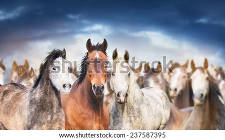 herd of horses close up , against cloudy sky, banner - stock photo