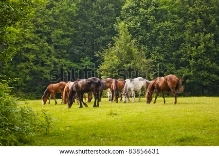 herd of horses eat in forest clearing - stock photo