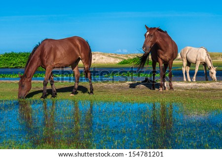 Herd of horses grazing in the flooded meadow - stock photo