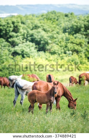 Herd of horses. Herd of horses eating grass. Vertical photo.