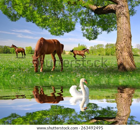 Herd of horses in a spring landscape in the foreground swan on a water level. - stock photo