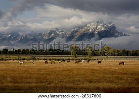 Herd of horses in front of Tetons with dramatic lighting - stock photo