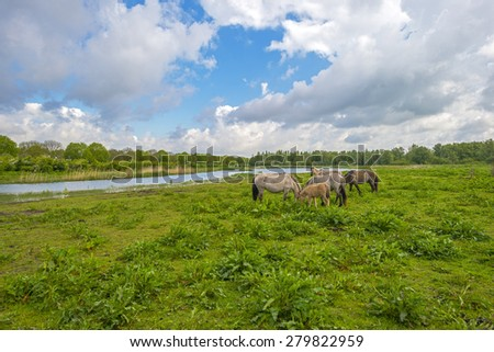 Herd of horses in nature under a blue cloudy sky in spring - stock photo