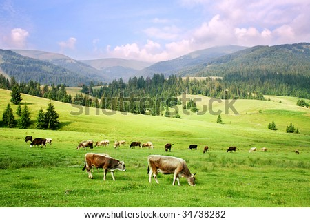 herd of horses in the Carpathian Mountains - stock photo