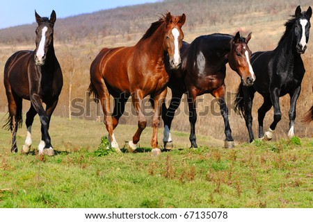 Herd of horses in the field - stock photo