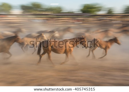 Herd of horses in the movement blurred driven into a the corral. Spain El Rocio. - stock photo