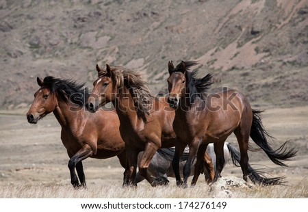 Herd of horses on a background of mountains and steppe grasses - stock photo