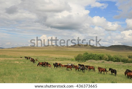 Herd of horses on a walk. - stock photo
