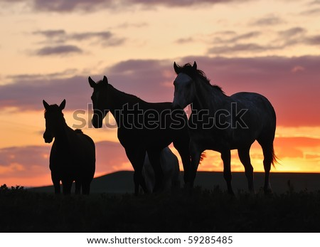 herd of horses on sunset - stock photo
