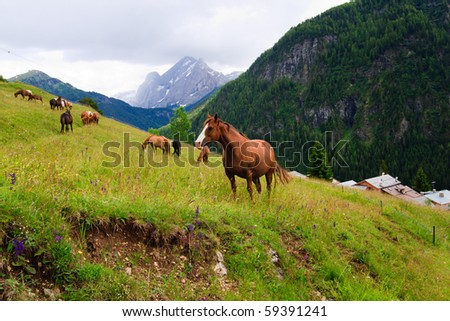 Herd of horses pasture in a mountains near highland village. - stock photo