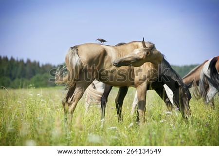 herd of horses pasture in a valley with green field - stock photo