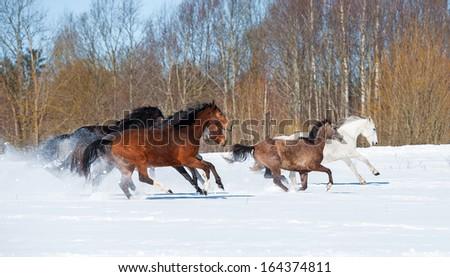 Herd of horses running in winter - stock photo