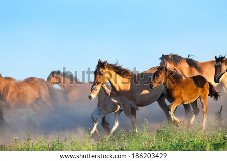 Herd of horses runs in pasture in summer - stock photo