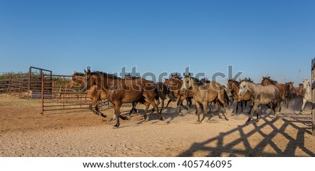 Herd of horses runs in the corral. Spain El Rocio. - stock photo
