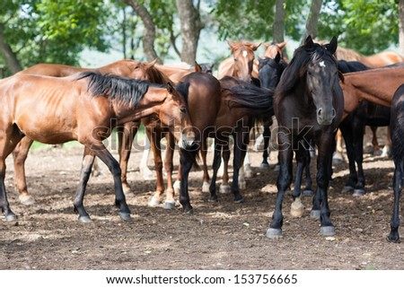 Herd of horses under the shade of trees on a hot day. - stock photo