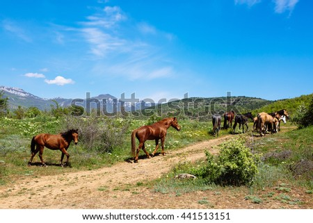 Herd of horses walking along the trail in the mountains against the blue sky - stock photo