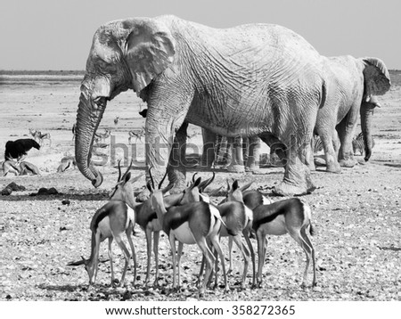 Herd of impalas and elephants at waterhole